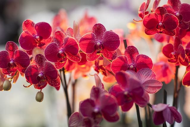 Flower Companies Dubai